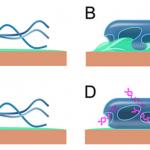 Cơ chế diệt khuẩn của Nano bạc